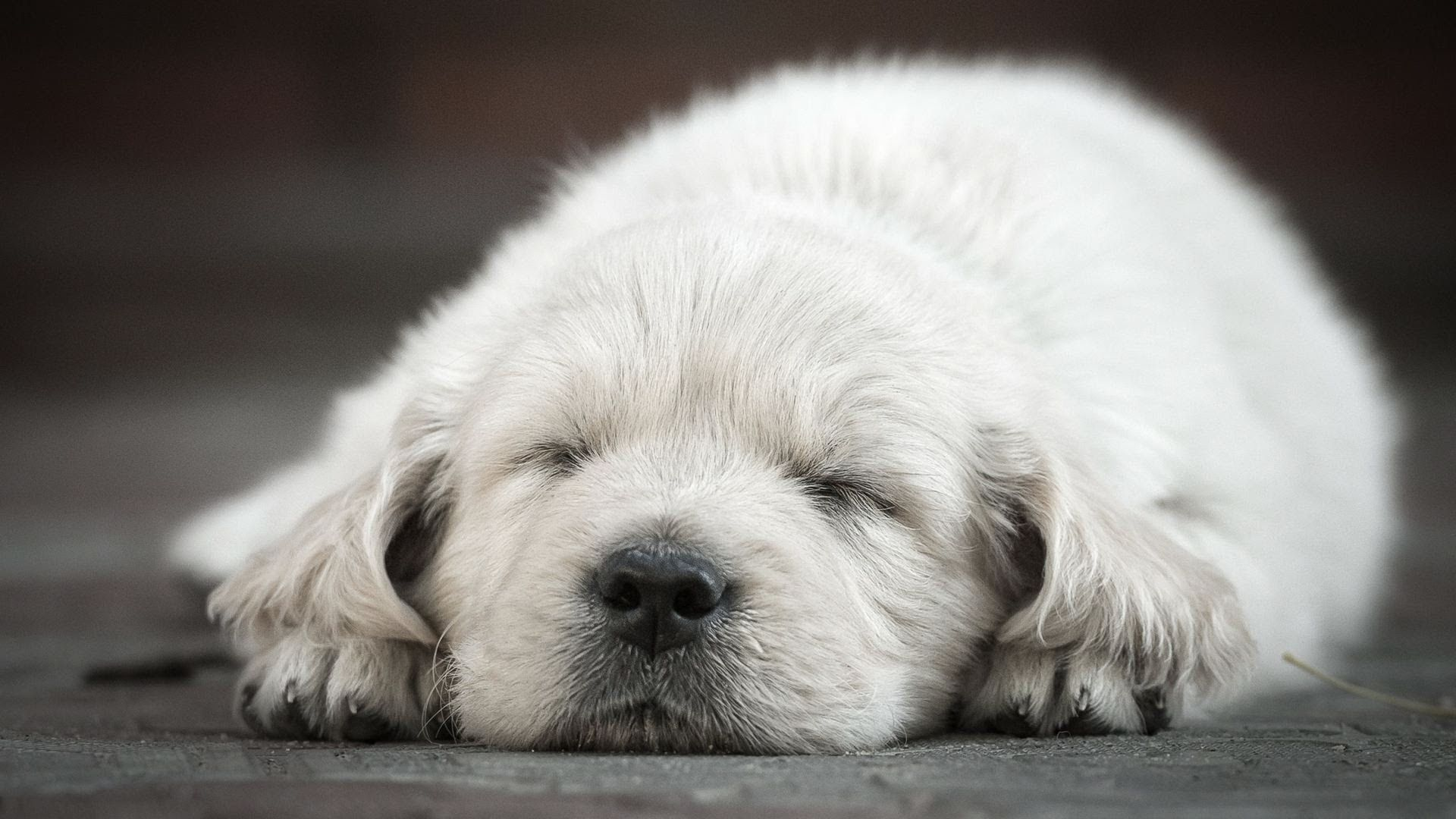 How to Keep Puppy from Crying at Night Puppy Care