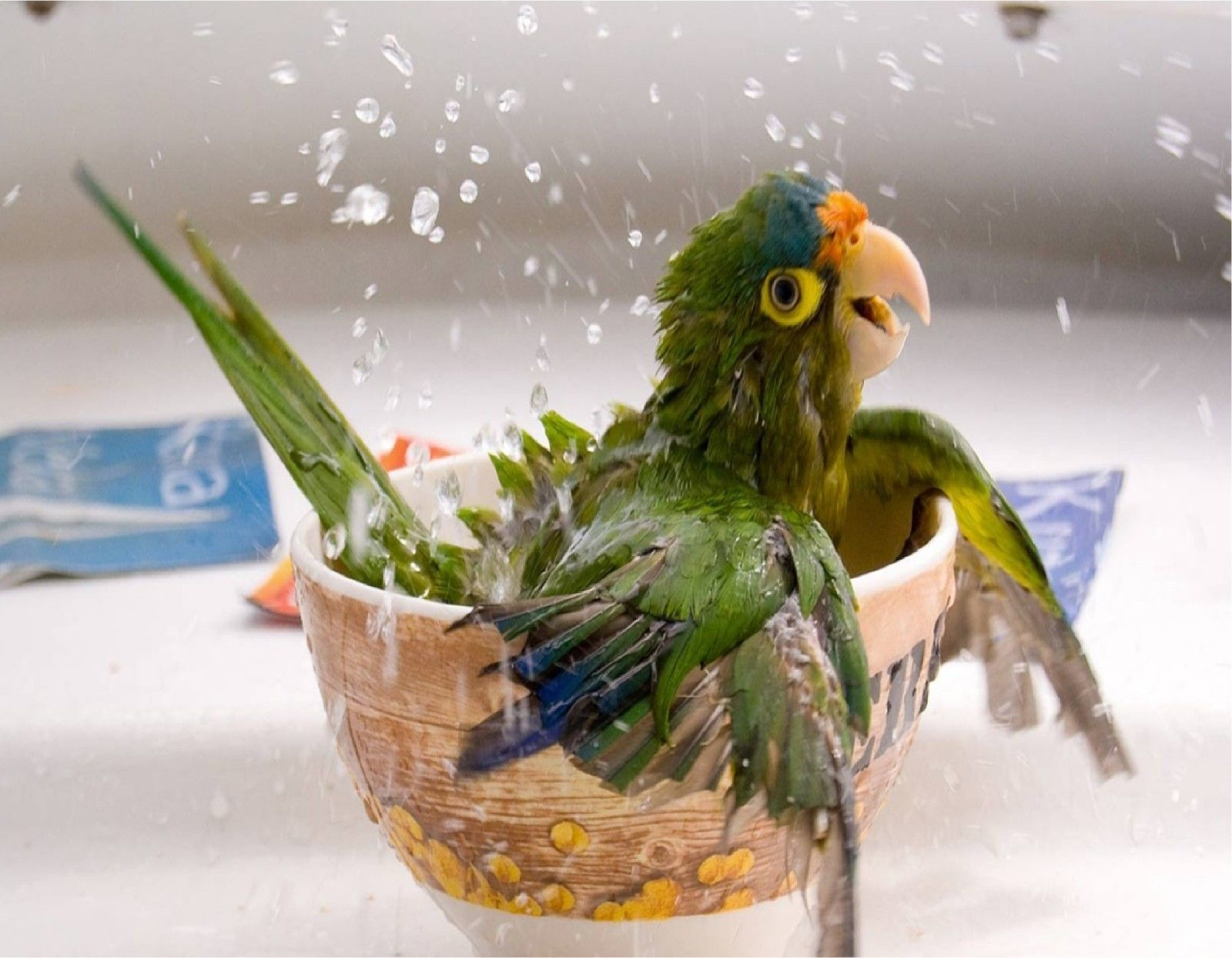 9 99 Parrot Taking A Bath Mouse Pad Image Fabric Top Rubber