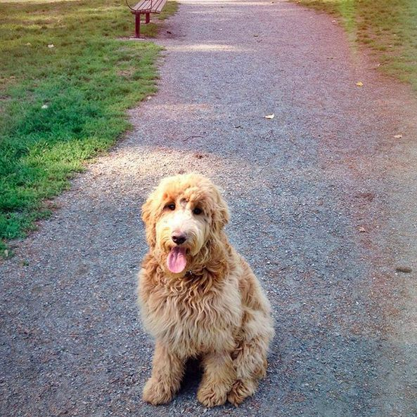 Please Come Play With Me Dog Park Dogs Park Pictures
