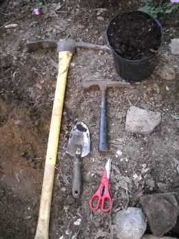 Shade Gardening In Rocky Soil Shade Garden Shade Plants Rock
