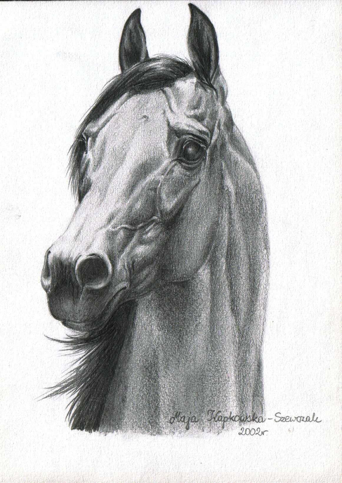 Pencil Arabian Horse Art - Dibujos De Caballos Arte Del Caballo