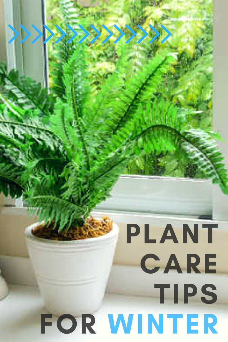 how to help your houseplants survive the winter the winter