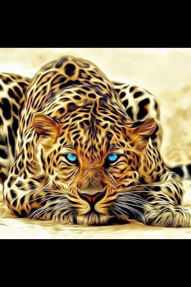Really Cool Pictures Of Animals