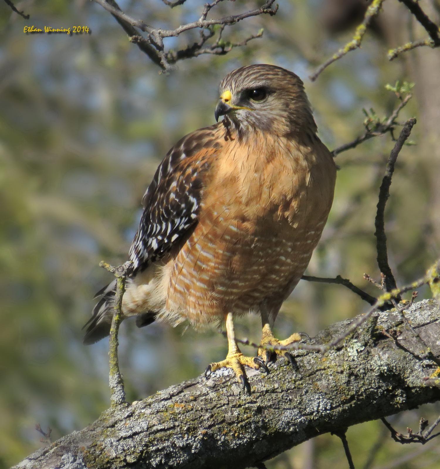 اجمل صور نسور و صقور في عالم النسر Eagle 2021 Eagle Animals Owl