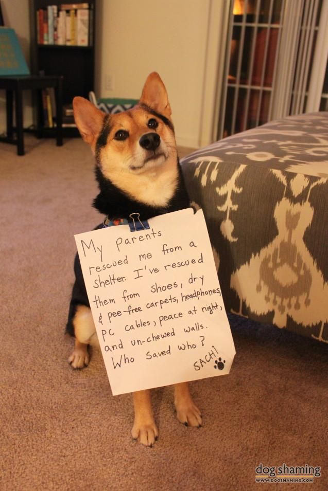 Who Rescued Whom Dog Shaming Photos Dog Shaming Funny Dog Memes