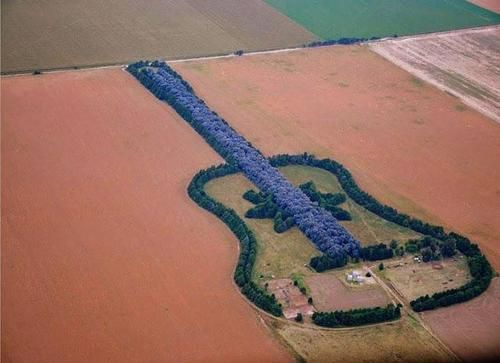 Guitar Farm, Argentina