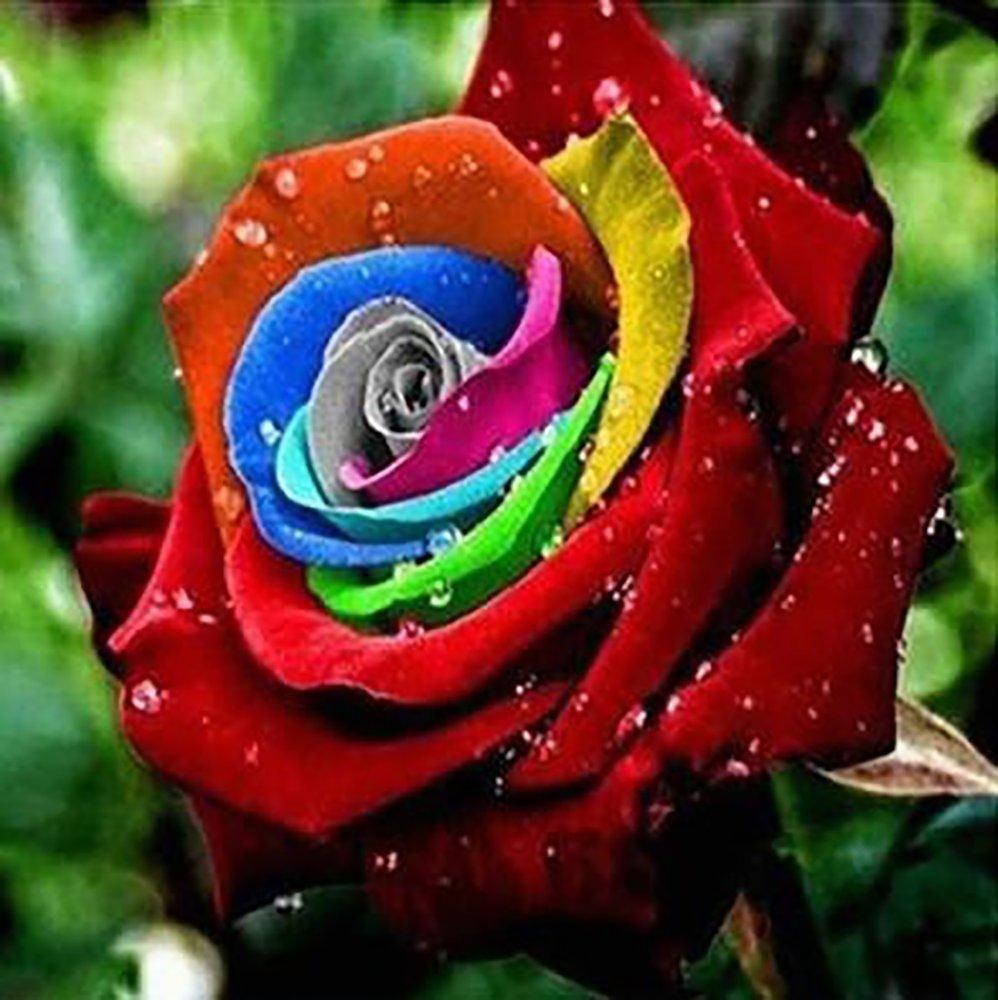 Flower Pots Planters 20 Kinds Of 100 Seeds Rainbow Rose Seeds
