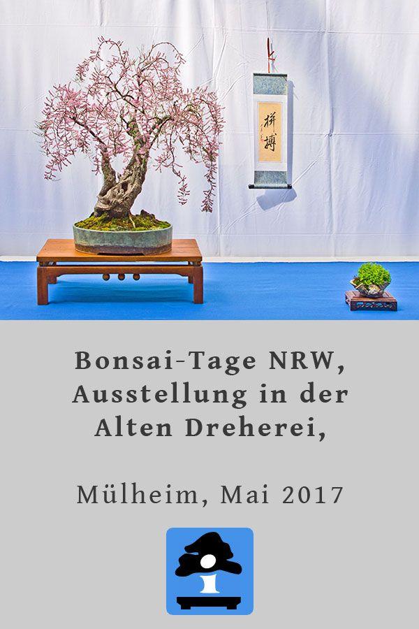 Fotos von den BonsaiTagen NRW, Ausstellung in der Alten