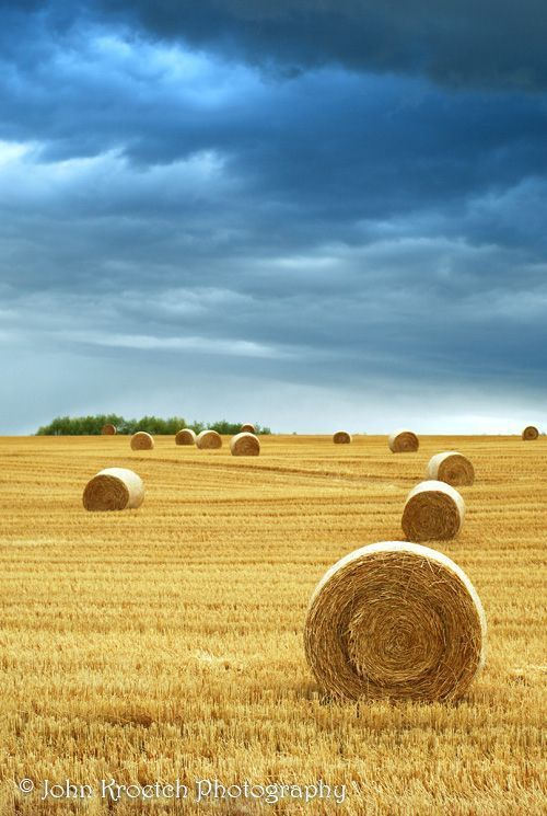 Hay Bales In Field With Stormy Sky Alberta Canada By