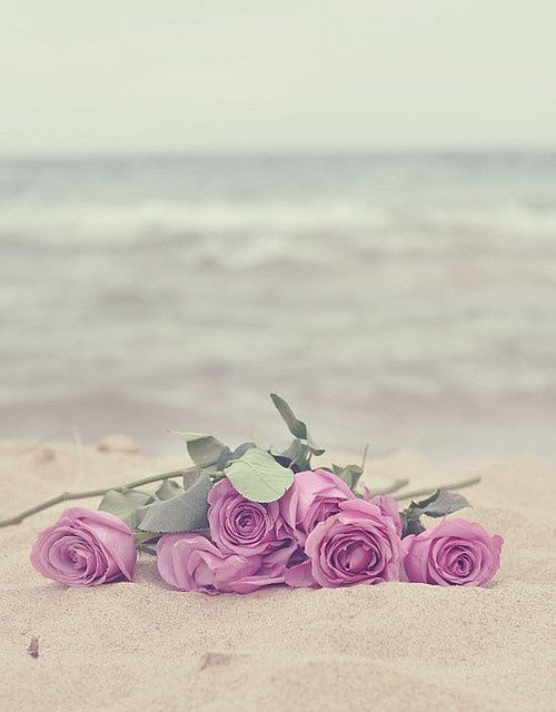 rosy roses on the beach