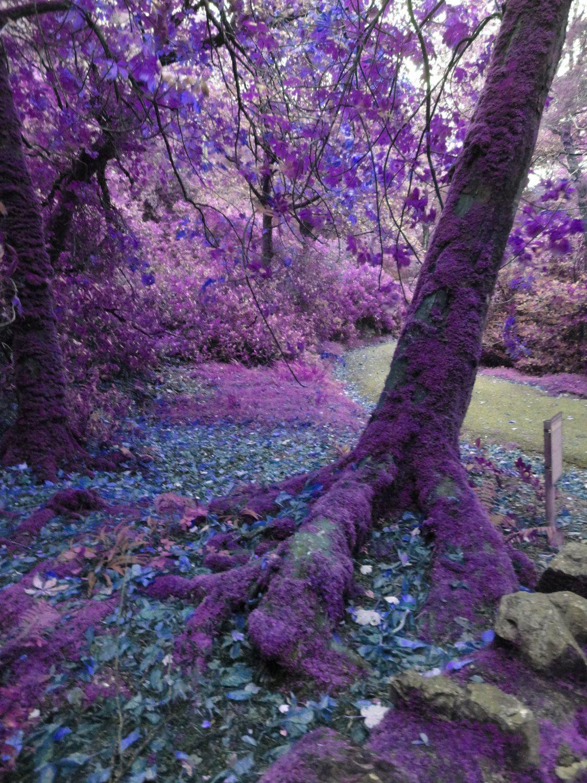 Mysterious Trees. Tree PhotographyA WalkFavorite ColorHello AugustBeautiful  ForestFairiesAmazing ...