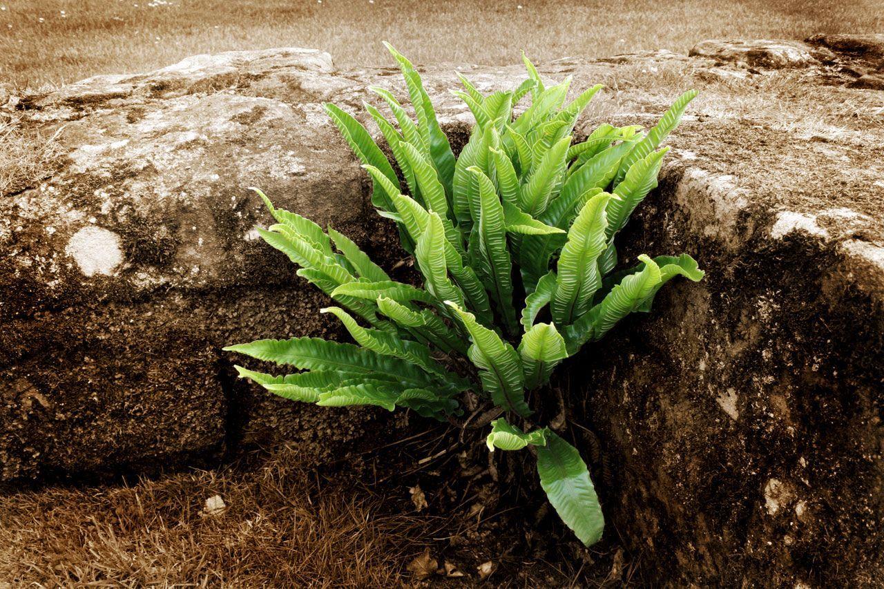 stone wall plants - Sök på Google