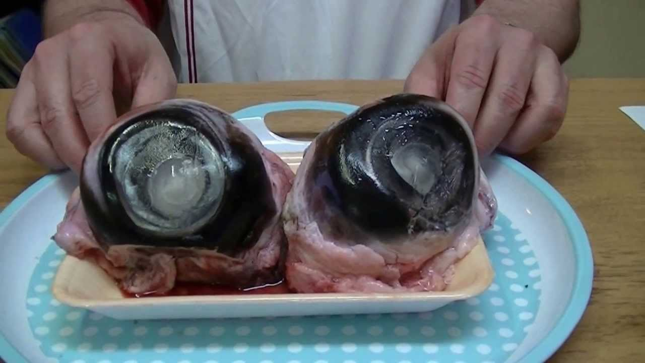 Tuna Eyeball – the dish is served fried or boiled with garlic and soya sauce…