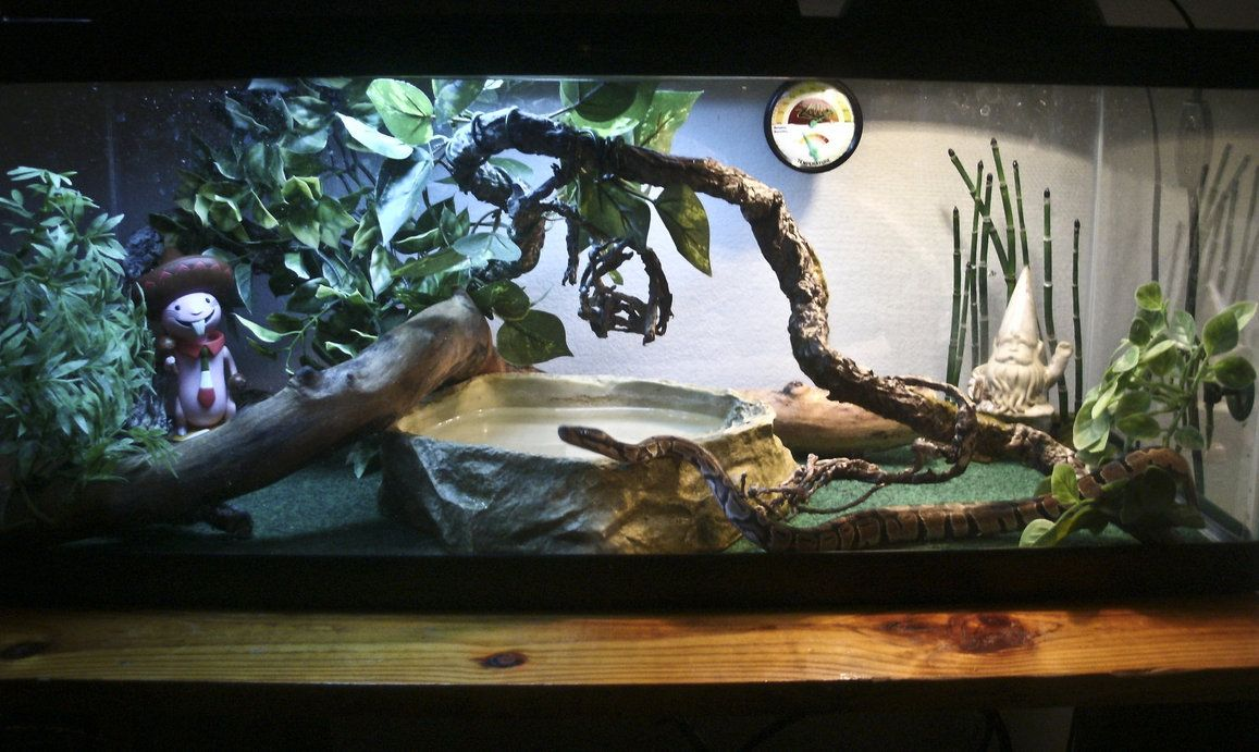Pet Snake Habitat Terrariums