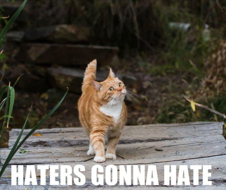 Cat Meme Quote Funny Humor Grumpy Sadic Wallpaper Background