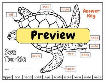 d2ab670d3d43aaefed04d7e673ce735e powers of 10 math face off 5 nbt 2 the 5th day turtle, sea