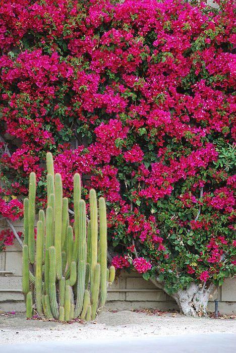 Beautiful desert blooms.
