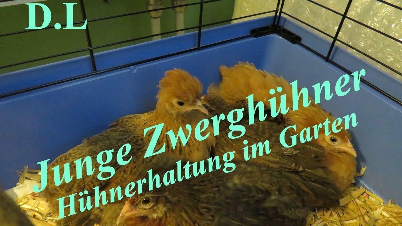 Hühnerhaltung Im Garten hühnerhaltung im garten diana lodi natur fische vögel insekten