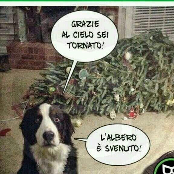 Immagini Divertenti Animali Natale.Capisco Il Povero Albero Di Natale Foto Di Animali Divertenti Umorismo Divertente Sugli Animali Divertente