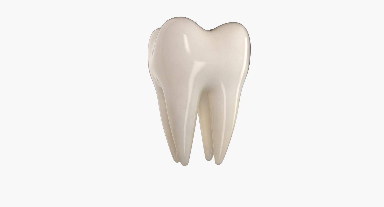 3d model #teeth #molar #tooth #anatomy #people #human #mouth ...