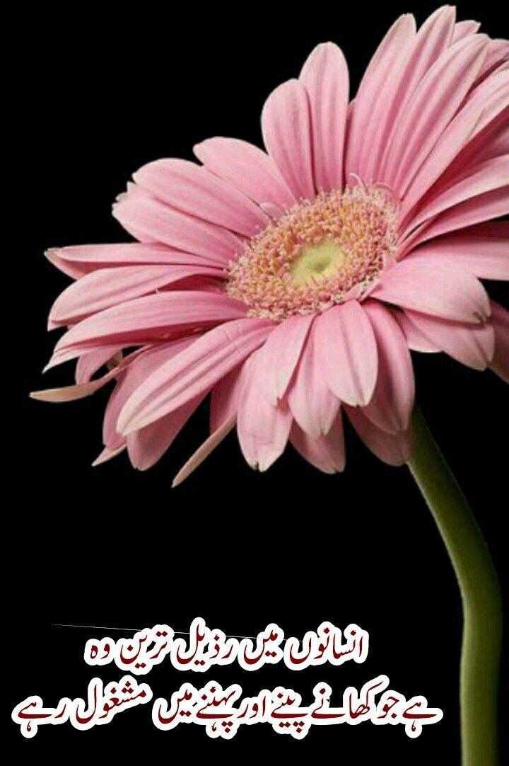 Pin by yusuf ansari on pearls shine pinterest urdu quotes allah beautiful flowers urdu quotes daisy allah islamic pretty flowers margarita flower bellis perennis daisies mightylinksfo