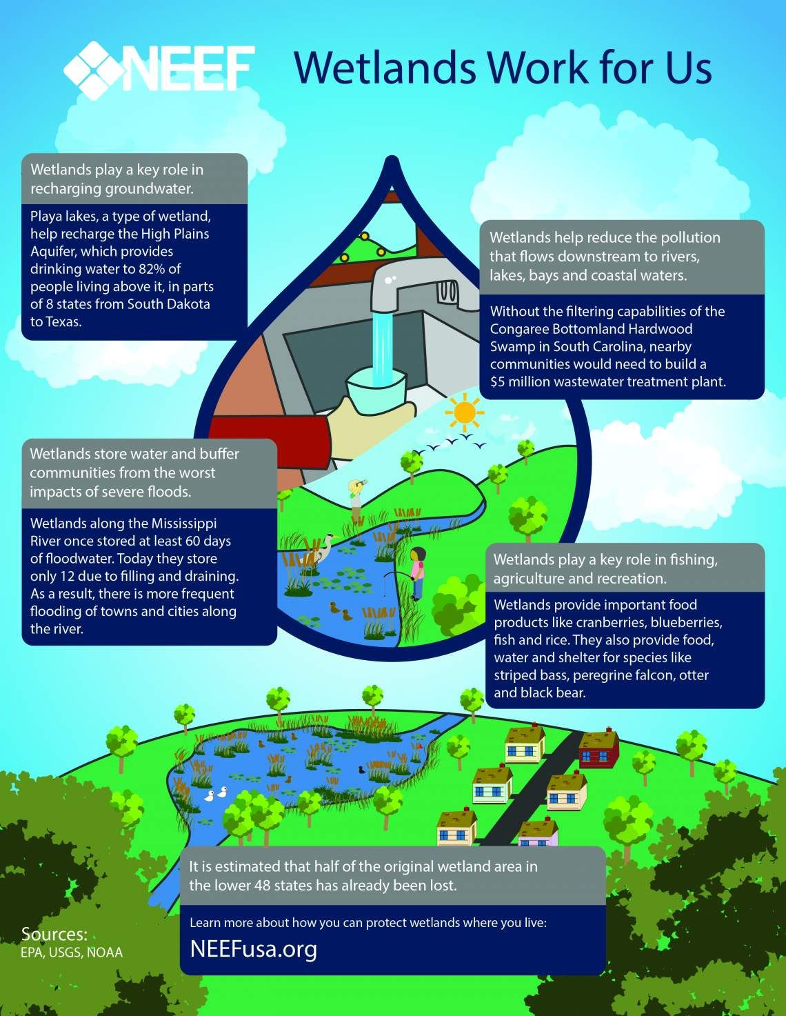 Infographic Wetlands Work for Us Environmental