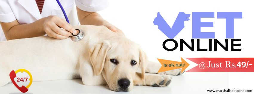 Ask a vet online just rs 49 it will charge only rs