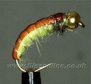 Rhyacophila Goldhead