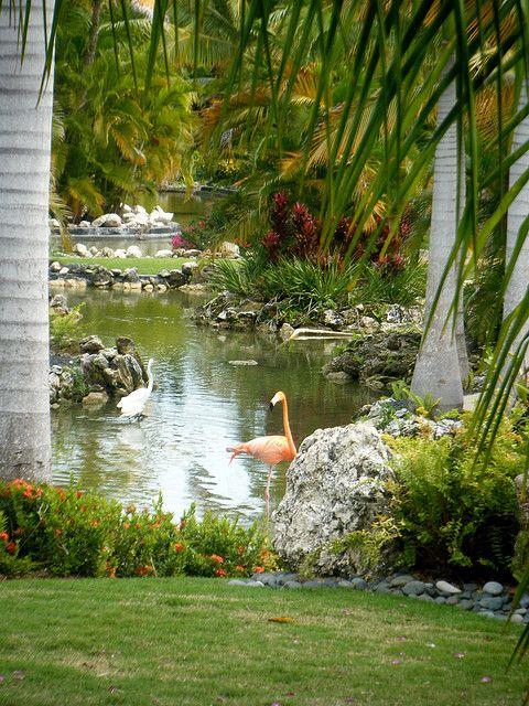 Flamingo - Dominican republic