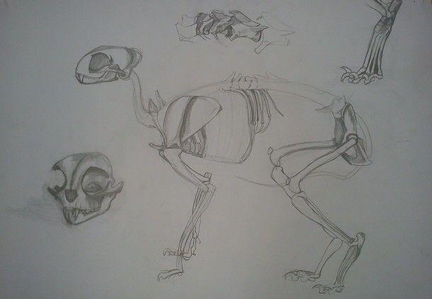 Skull, cat, skeleton