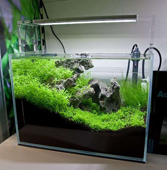 20 Litre Opti White Tank With ADA LED Lights. AquascapingLedHomemade Ice
