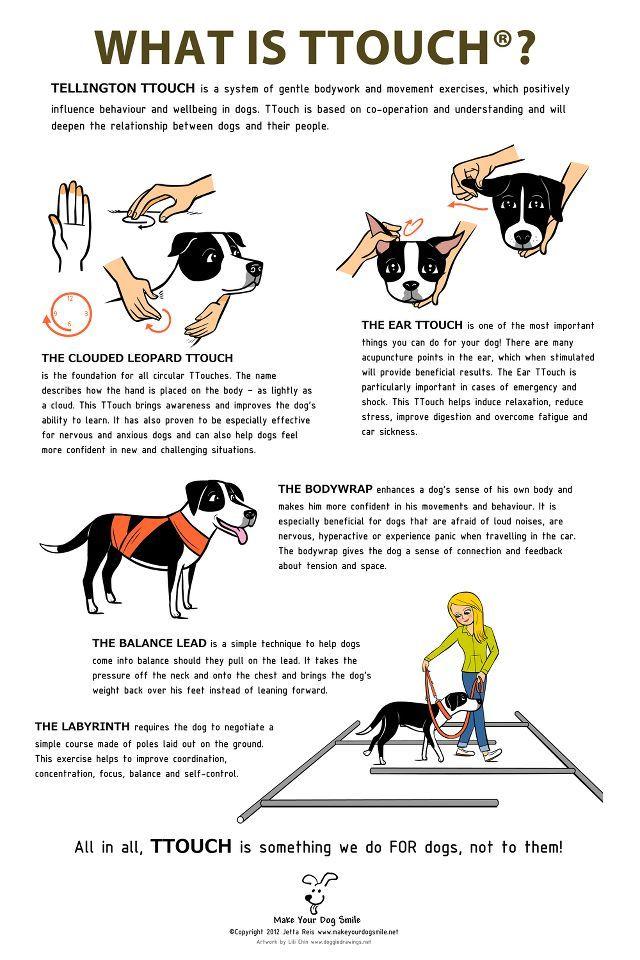 Dog Agility At Olympia 2016 Dog Care Dog Training Dogs