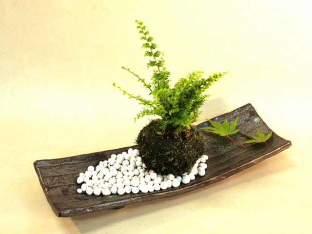 苔玉(タマシダ)・長角皿