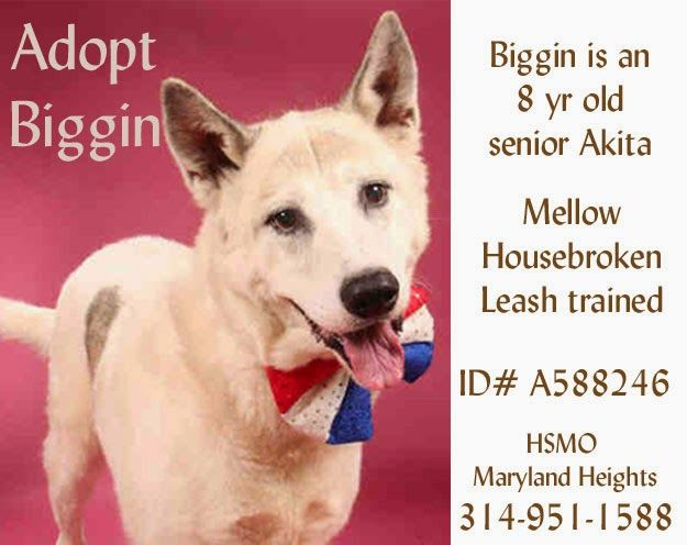 Humane Society Of Missouri Humane Society Animals Pet Adoption