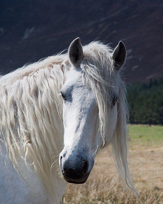 Cheval blanc magnifique animaux et paysage pinterest - Dessin de cheval magnifique ...