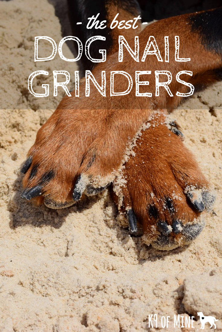 Best Dog Nail Grinders + How To Grind Dog Nails. Learn how to use a canine nail grinder for easier, stress-free nail cutting!