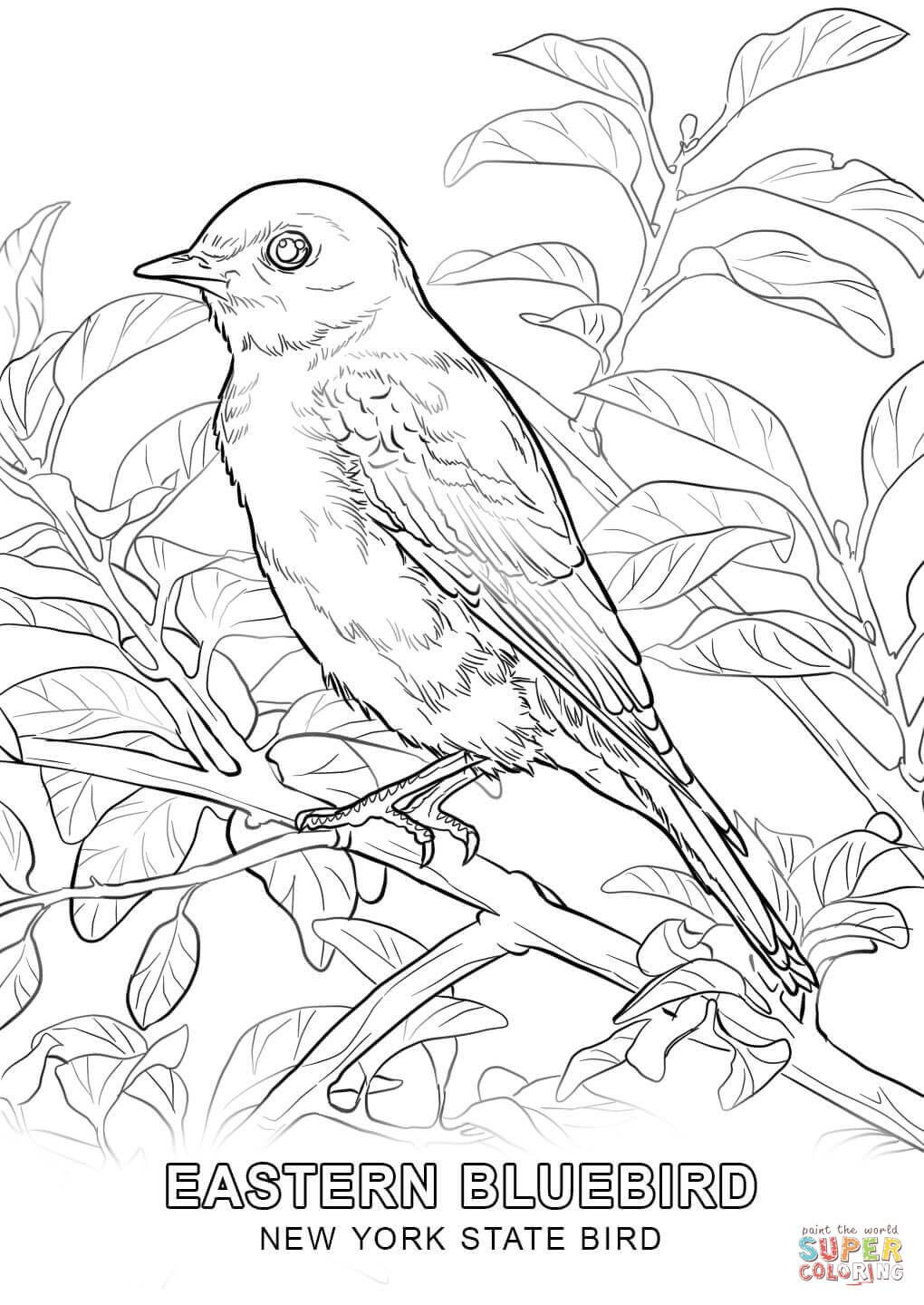 New York State Flower Coloring Page in