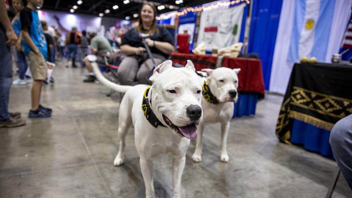 Akc National Championship American Kennel Club Dog Breeds Estrela Mountain Dog