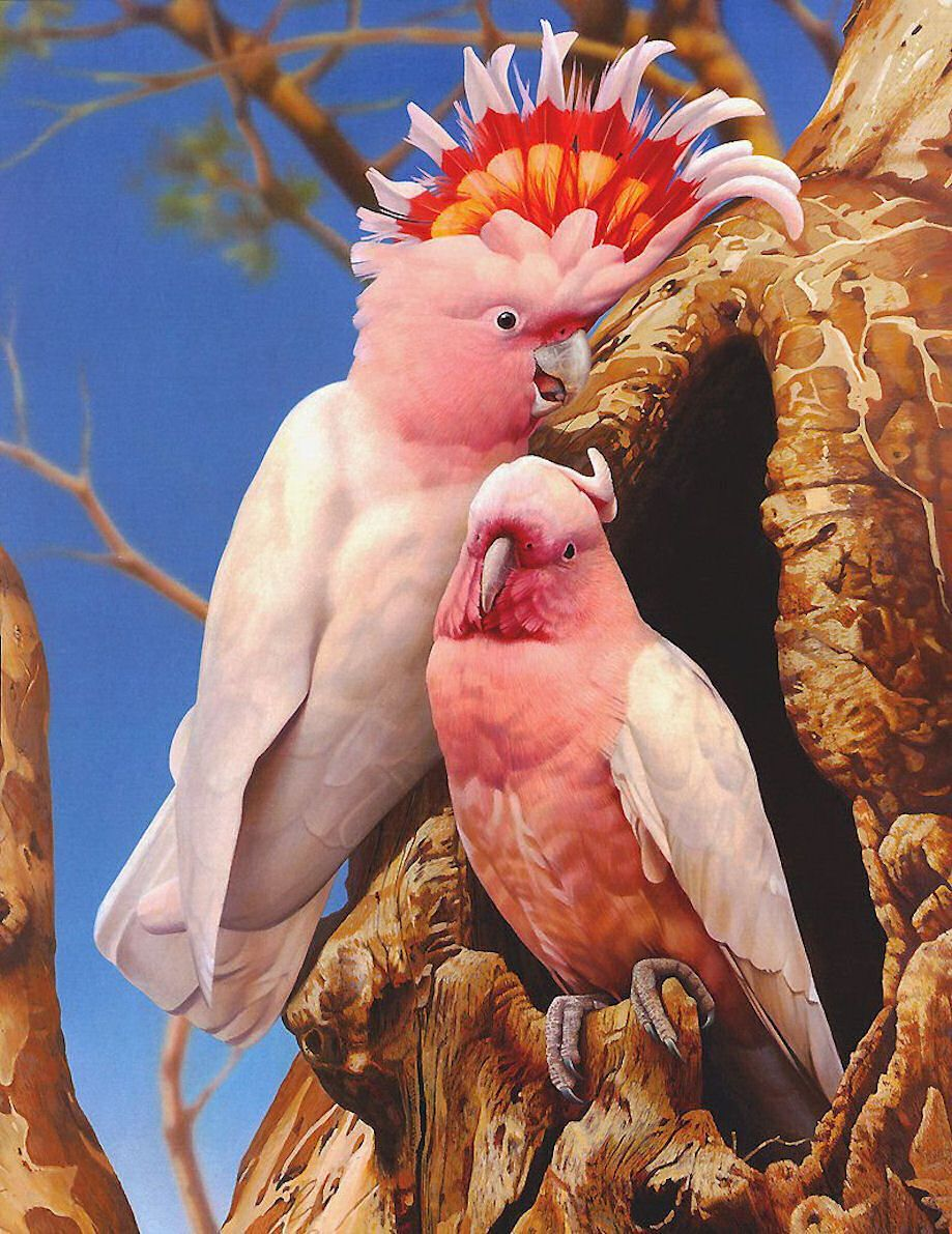 The Major Mitchell\'s Cockatoo, Mitchell\'s Cockatoo or Leadbeater ...
