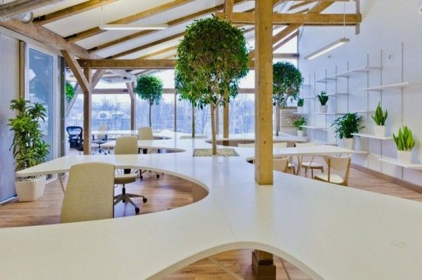 Modern working space featuring living trees and unique desk unit