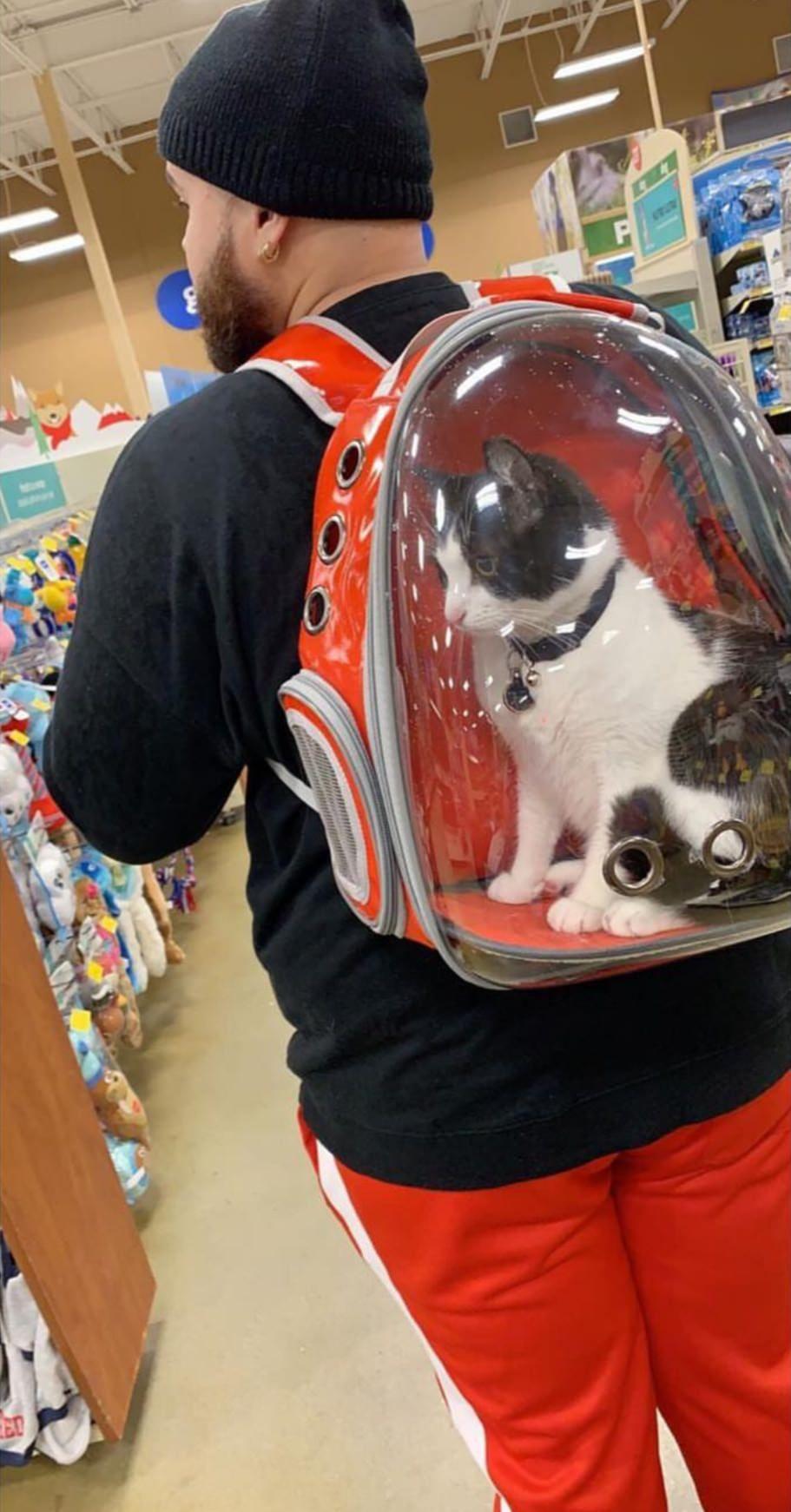 My buddy got a Catpack!https//ift.tt/2PKGxoX Funny