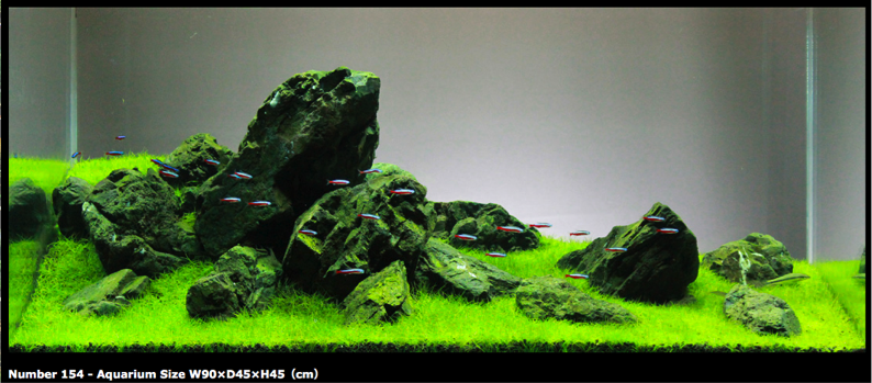 Iwagumi Japanese Rock Garden Style Aquascape All Aqua