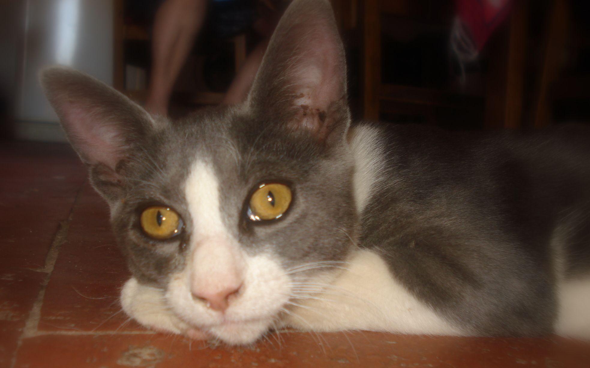 Ojitos delineados