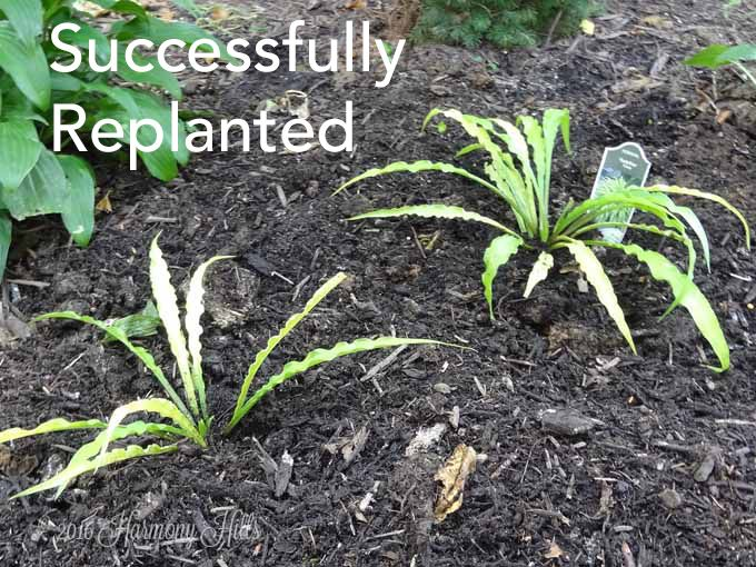3 steps for fixing clay soil clay soil garden ideas and gardening