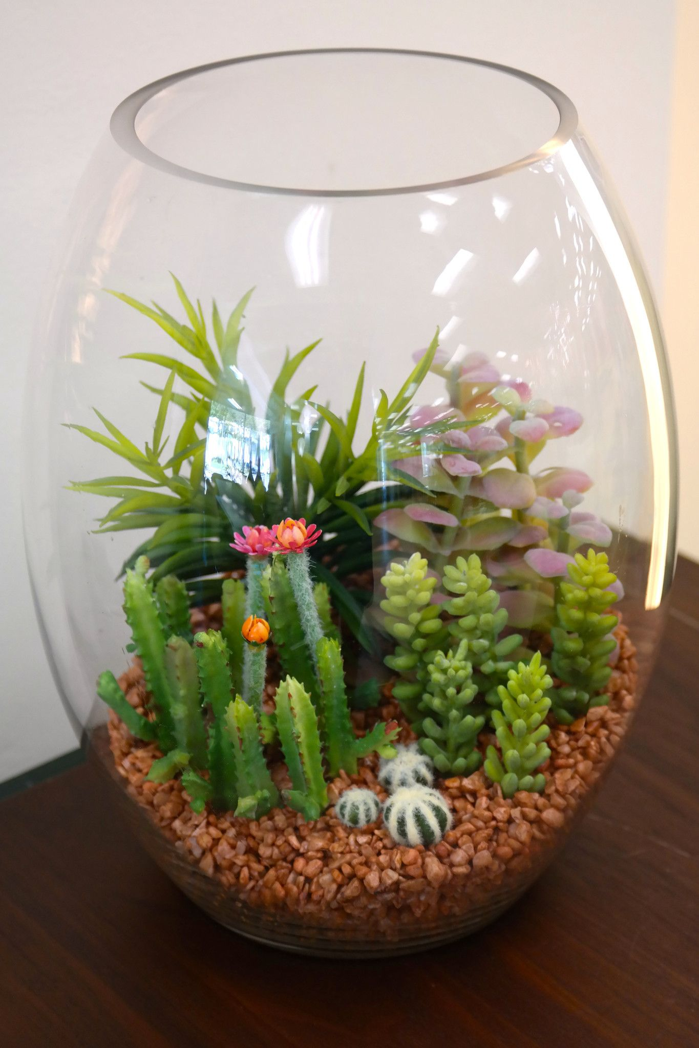 du pot assorted cactus in glass lg 11 h succulent