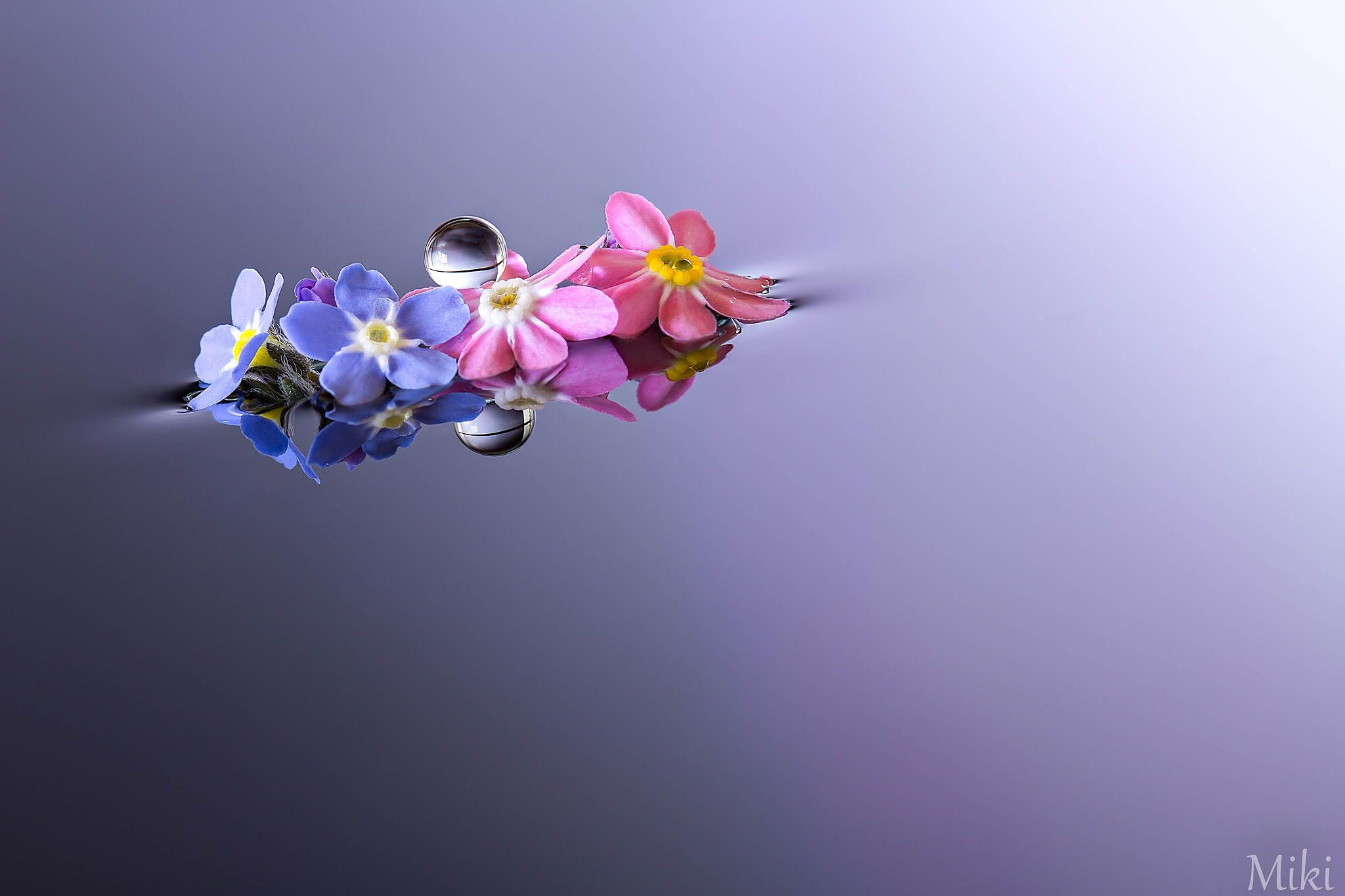 Best Friends Forever by Miki Asai on 500px