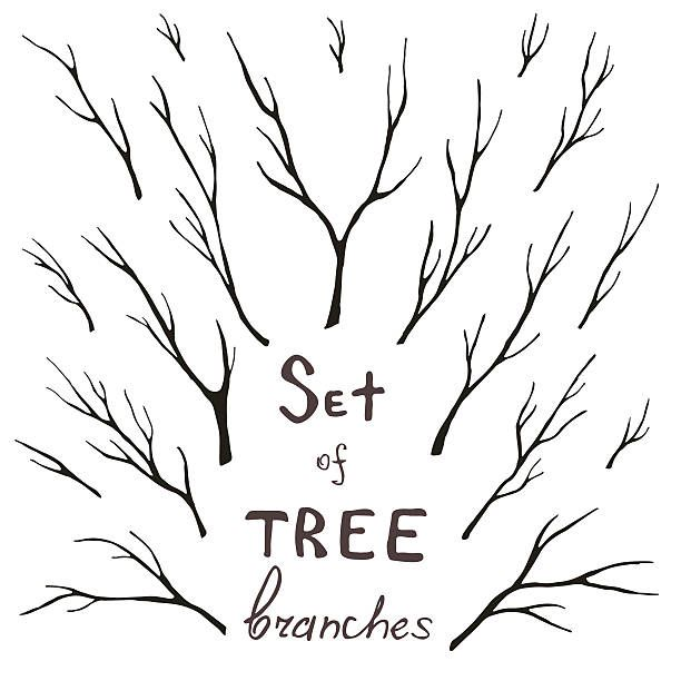 Vector Set Of Tree Branches Trunk Twig Stem Vector Art Illustration Branch Drawing Family Tree Logo Tree Drawing