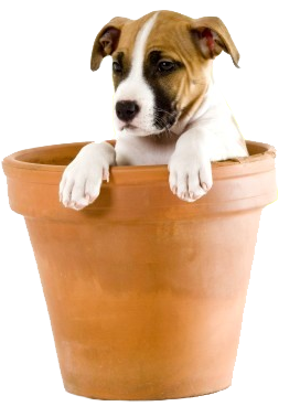 Image result for puppy dog png