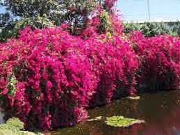 Plants For Fruit Trees Nursery Hedge Hedges In Los Angeles San Go Riverside Orange County
