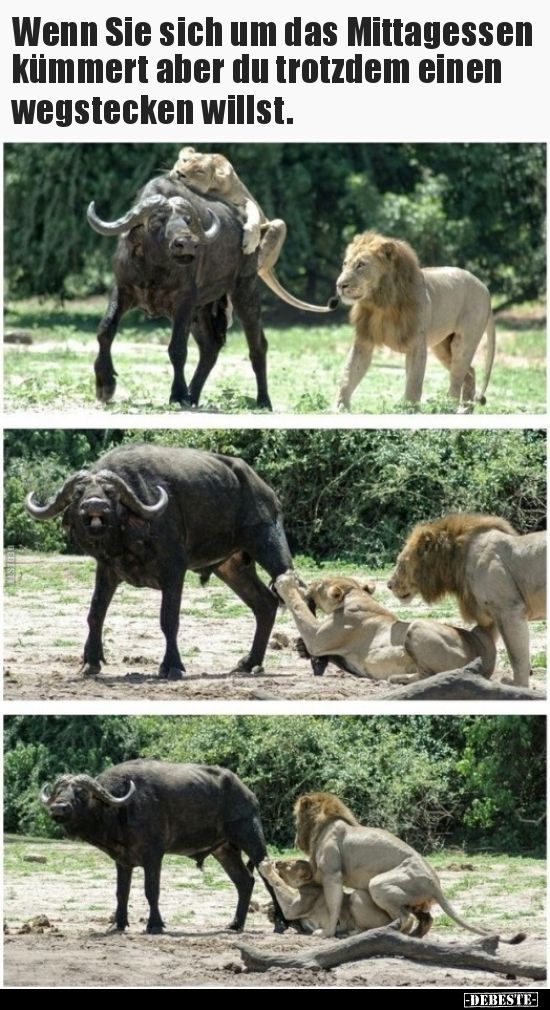 Photo of If you take care of lunch but you still ..   Funny pictures, …